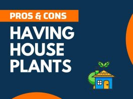 Pros Cons of Having House Plants