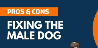 Pros and Cons of Fixing the Male Dog